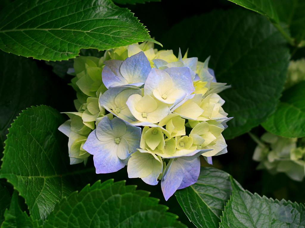 Flor Branca - Tantalinha
