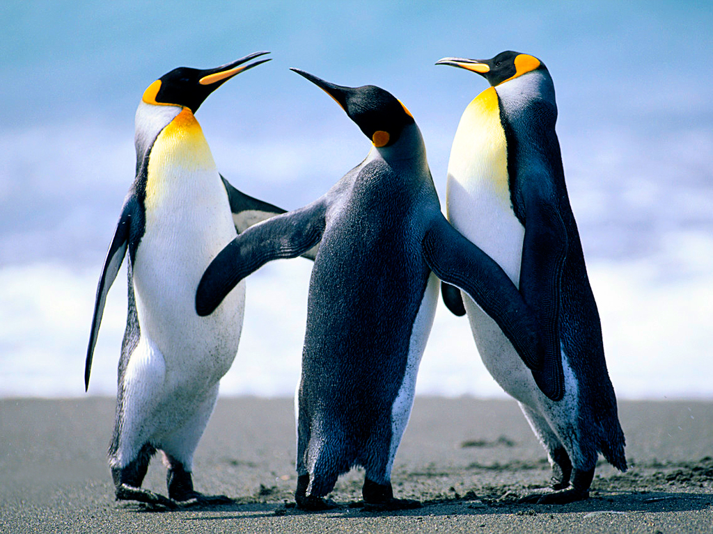 Pinguins - Tantalinha